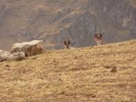 Lauschangriff à la peruana